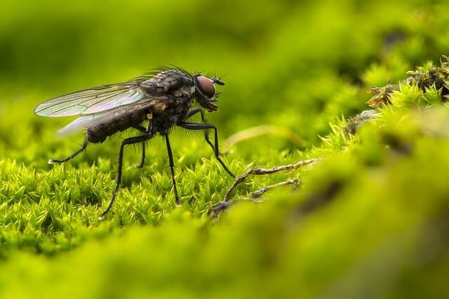 domowe sposoby na muchy